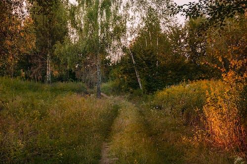 Základová fotografie zdarma na téma cestování, dobrodružství, les, listy