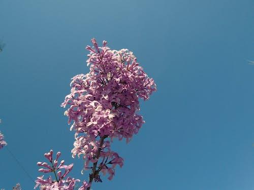 bahar, Çiçekler, doğa, gökyüzü içeren Ücretsiz stok fotoğraf