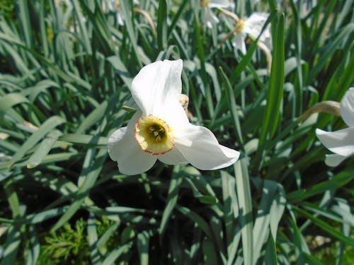 bahar, beyaz, doğa, fulya içeren Ücretsiz stok fotoğraf
