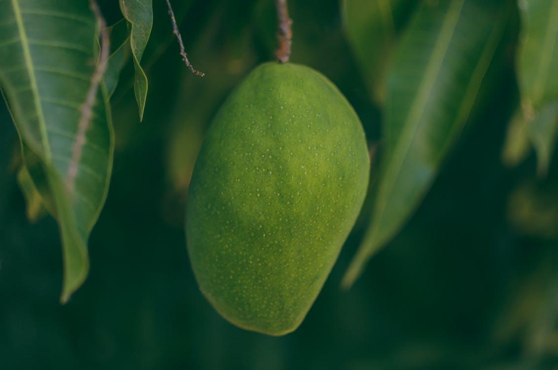 Selective Focus Photography of Mango
