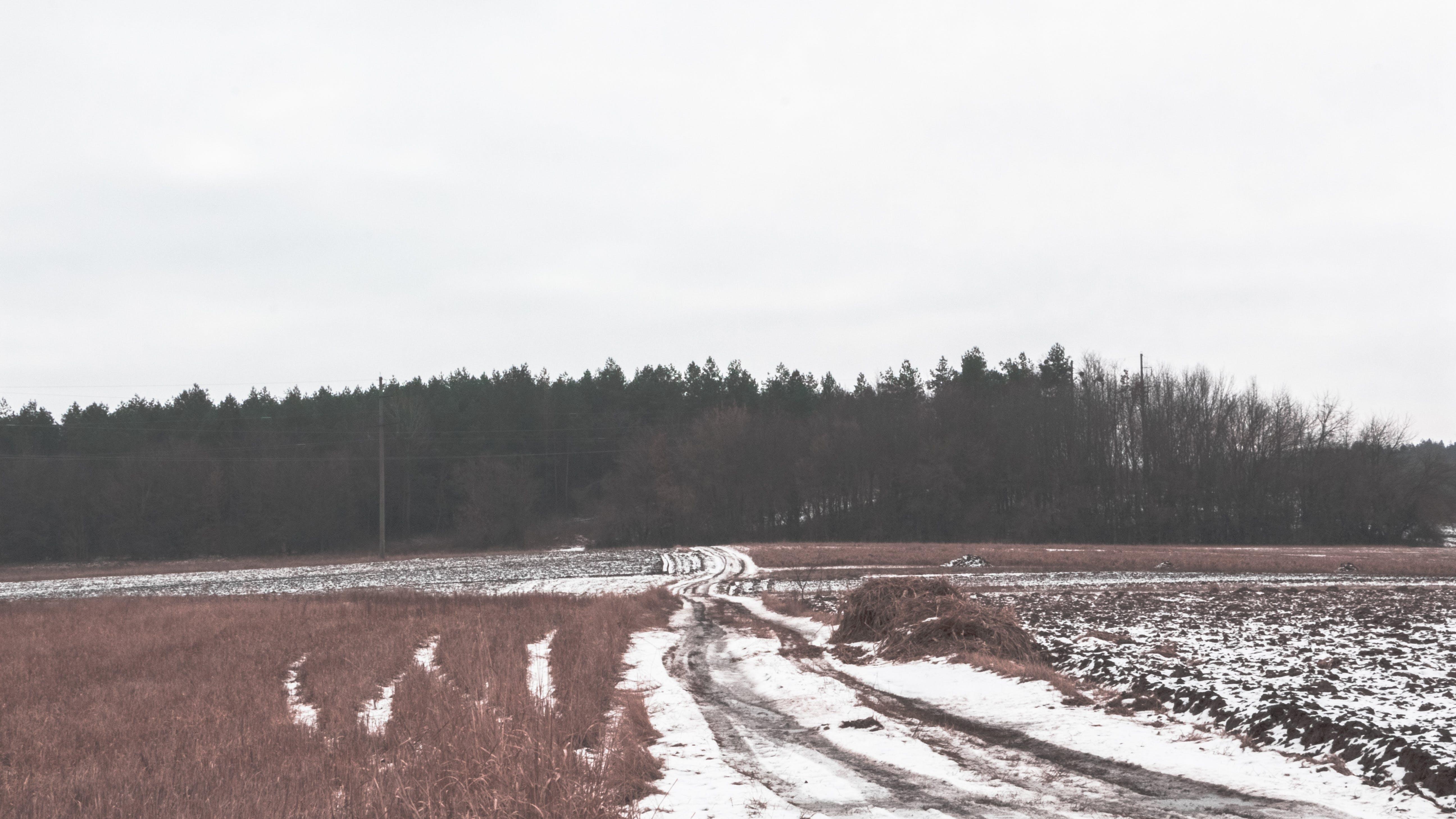 Kostenloses Stock Foto zu feld, heu, land, schnee