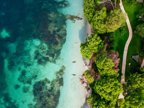 Aerial Photography of Beach With Trees
