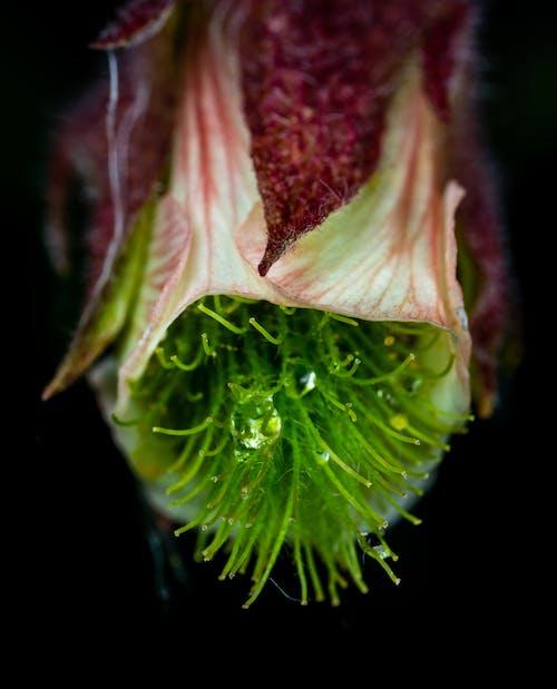 Immagine gratuita di fiore, goccia, macro, rugiada