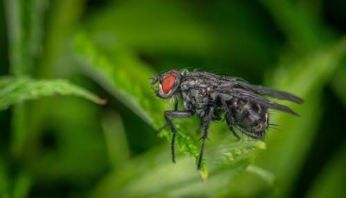 Immagine gratuita di insetto, macro, mosca
