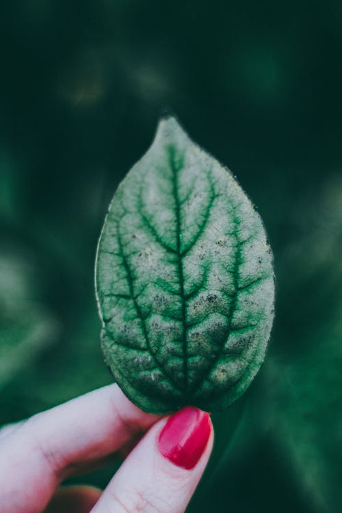 Person Holding Green Leaf