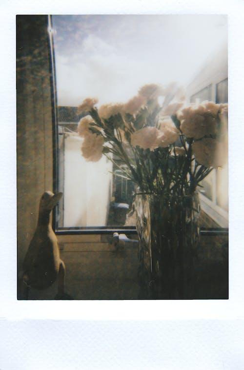 White Flowers on Vase