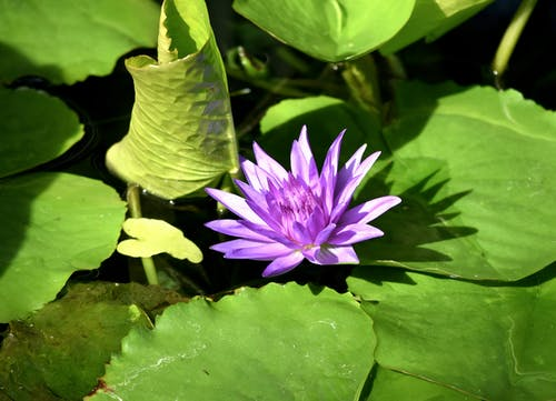 Flower On Body Of Water