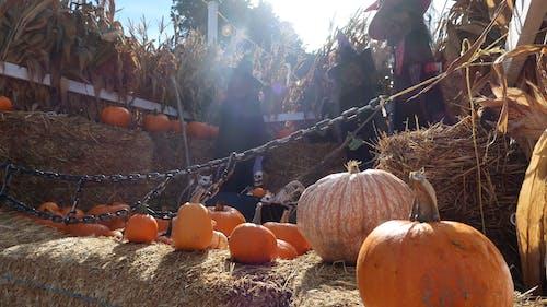 Free stock photo of autumn decoration, decorations, halloween