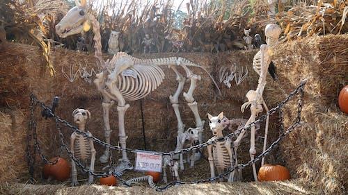 Free stock photo of autumn, autumn decoration, decorations