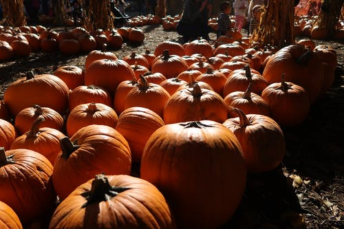 Free stock photo of autumn, autumn decoration, colors of autumn