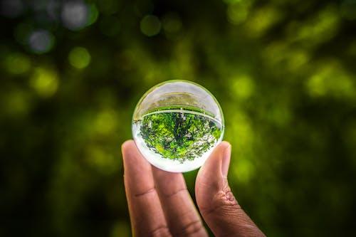 Photos gratuites de arbres, boule de cristal, cercle, feuilles