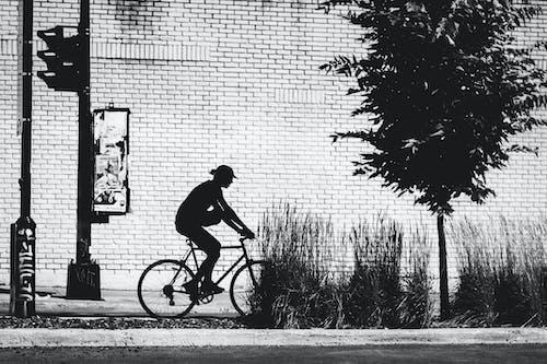 Imagine de stoc gratuită din alb-negru, arbore, bicicletă, biciclist