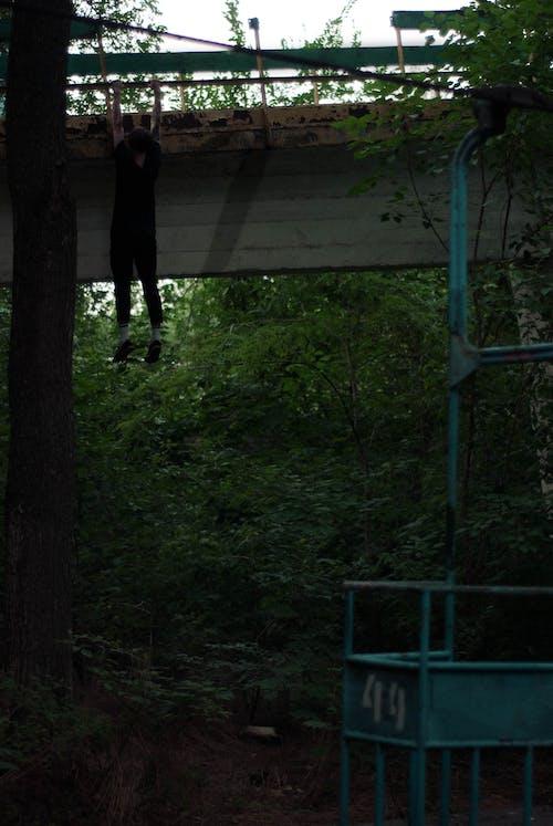 나무, 녹색, 산업의, 소년의 무료 스톡 사진