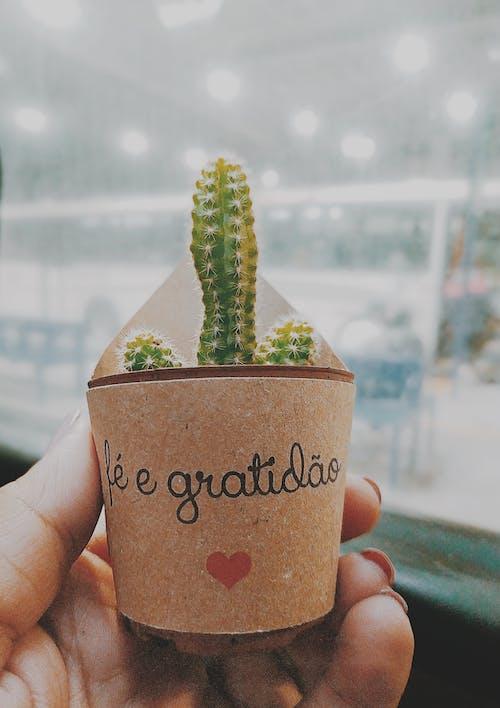 Foto stok gratis kaktus, kilang, pot, tanaman dalam pot