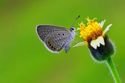 Selective Focus of a Butterfly Perched on Flower