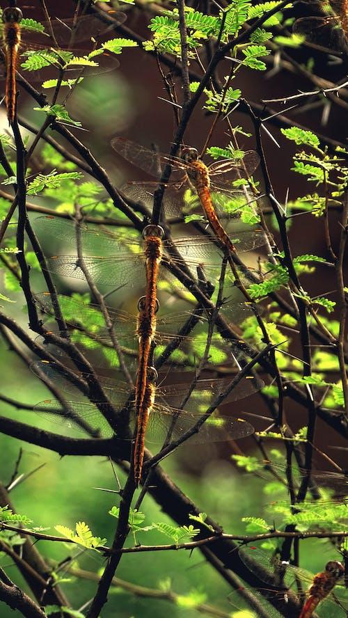 在线, 戶外, 掛, 昆蟲 的 免费素材照片