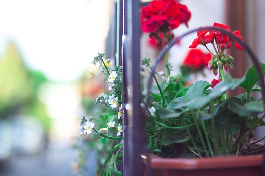 Free stock photo of light, flowers, spring, window
