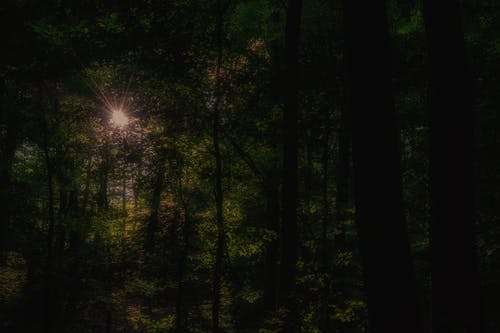 Free stock photo of forrest, golden sun