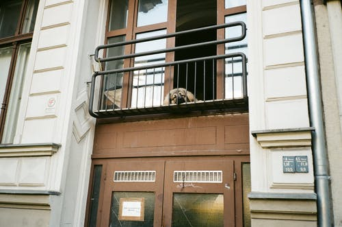 Dog Lying Down on Balcony