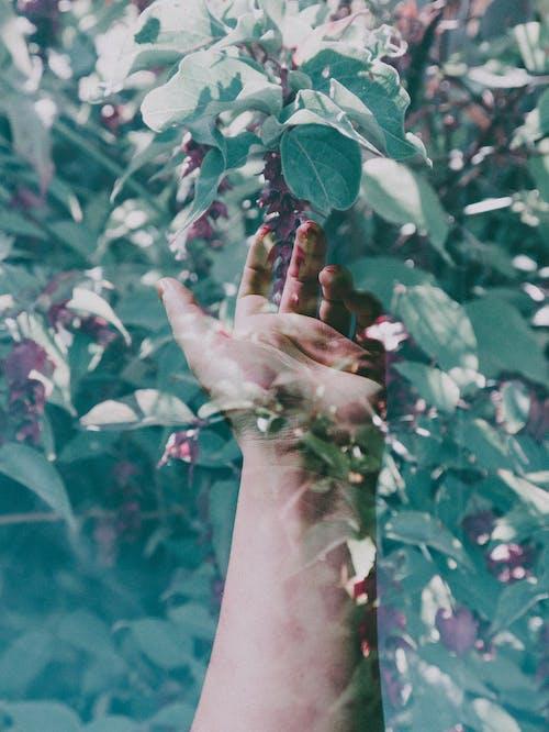 Δωρεάν στοκ φωτογραφιών με άνθρωπος, αποτέλεσμα, γκρο πλαν, δέντρο