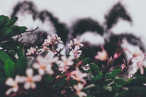 フラワーズ, フローラ, ぼかし, 咲くの無料の写真素材