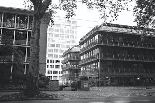 Foto stok gratis administrasi, Arsitektur, bangunan, biro