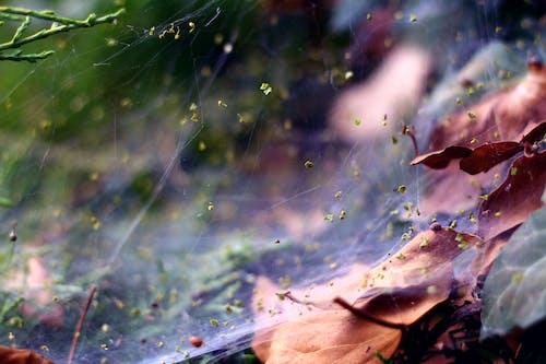 Foto profissional grátis de declínio, desfocar o fundo, filamento, folhas caídas