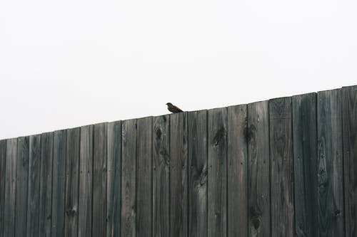 Ilmainen kuvapankkikuva tunnisteilla aita, keskusta, linnunpönttö, lintuperspektiivi