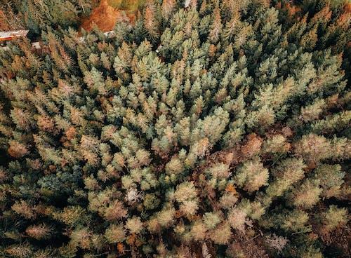 Безкоштовне стокове фото на тему «аерознімок, дерева, з висоти польоту, зверху»