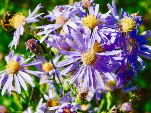 野花 的 免费素材照片