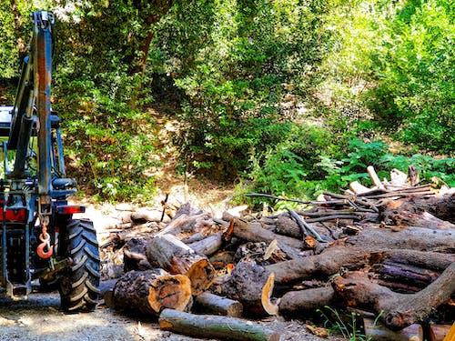 Foto stok gratis kayu, kayu bakar, kayu cincang, kehidupan petani