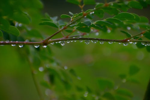 Free stock photo of evergreen, monsoon