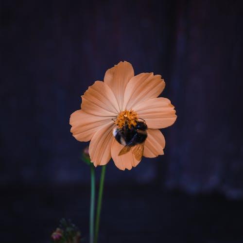 Foto profissional grátis de abelha, cor, flor, fundo borrado