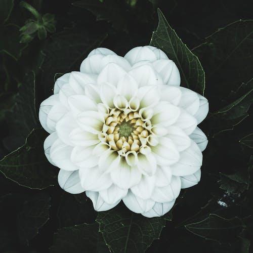 Foto profissional grátis de branco, ecológico, flor, flor branca