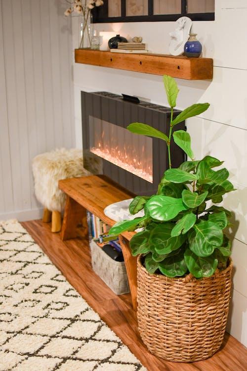 방, 벽난로, 식물, 실내의 무료 스톡 사진