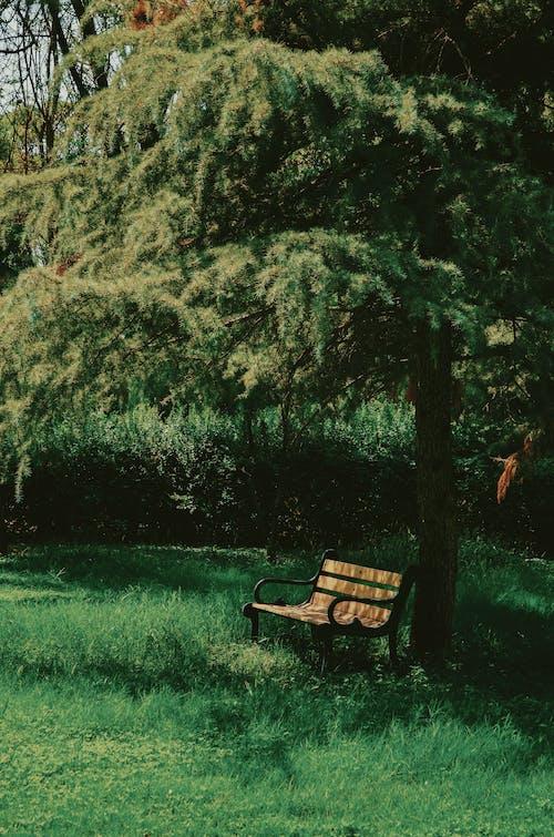Δωρεάν στοκ φωτογραφιών με γρασίδι, δέντρο, ξύλινος πάγκος, παγκάκι