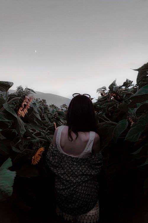 Imagine de stoc gratuită din femeie, floarea-soarelui, flori, lan de floarea-soarelui