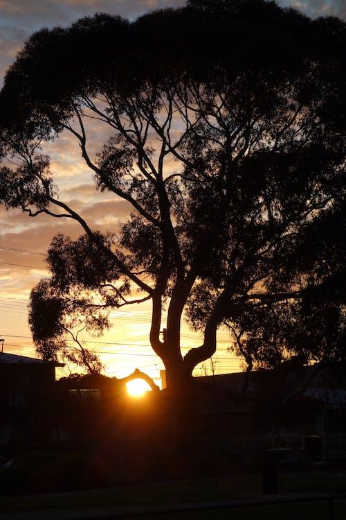 Free stock photo of dawn stonehenge inspiration, silhouette