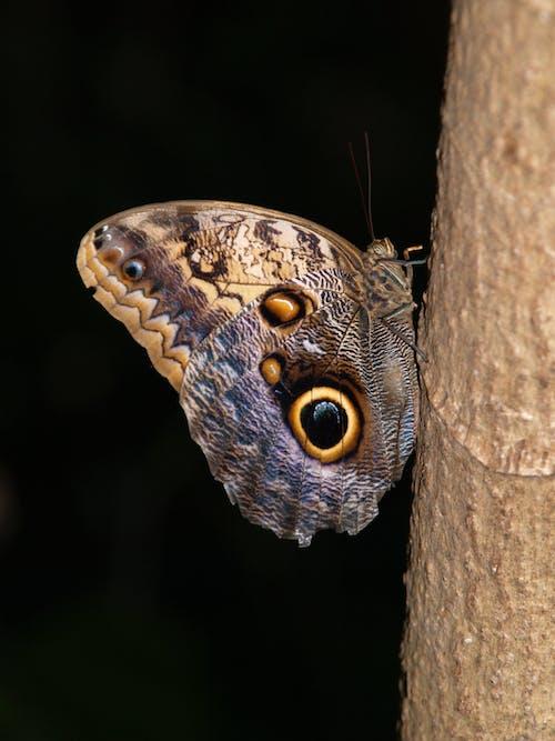 Imagine de stoc gratuită din fluture