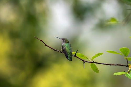 bokeh, sinekkuşu içeren Ücretsiz stok fotoğraf