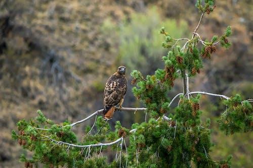 ağaç, kuş, şahin içeren Ücretsiz stok fotoğraf