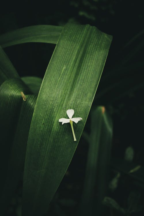 Základová fotografie zdarma na téma flóra, kytka, list, rostlina