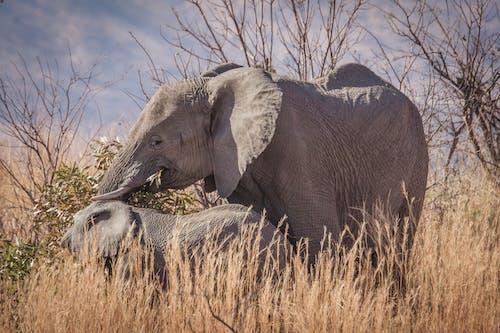 doğa, Doğa Ana, doğa fotoğrafçılığı, filler içeren Ücretsiz stok fotoğraf