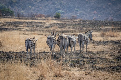 doğa, Doğa Ana, doğa fotoğrafçılığı, hayvanlar içeren Ücretsiz stok fotoğraf