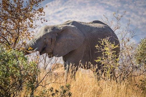doğa, Doğa Ana, doğa fotoğrafçılığı, fil içeren Ücretsiz stok fotoğraf