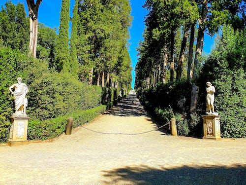 Základová fotografie zdarma na téma boboli garden, cesta, cestování fotografie, cíl cesty