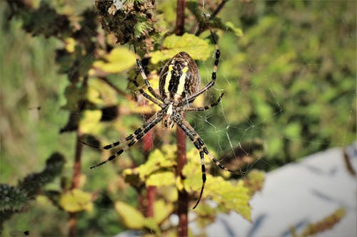Foto profissional grátis de aranha