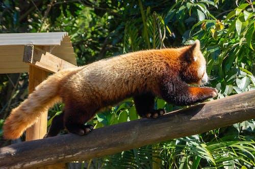 Photos gratuites de animal, arbre, arbres, bois