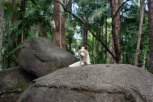 Photo of White Coated Dog