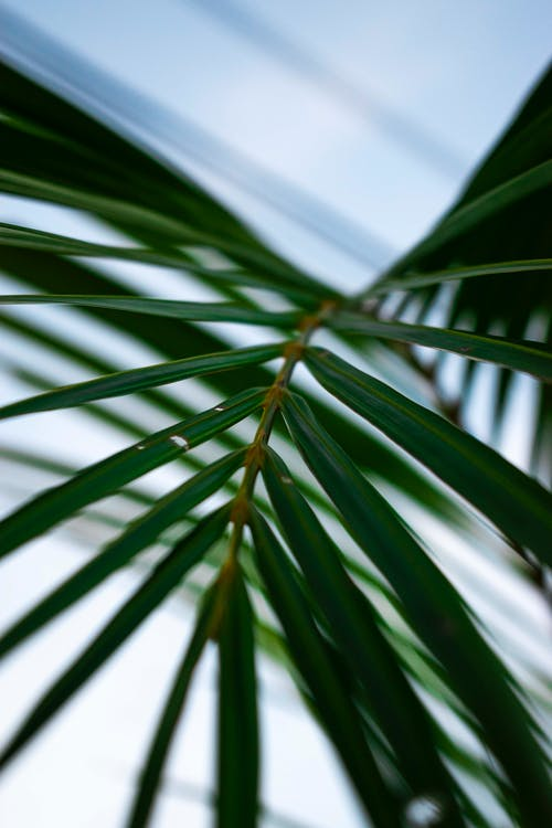Selective Focus Photography of Green-leafed Palm Plant